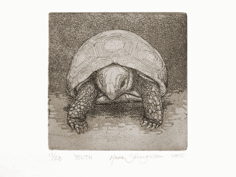 Giant Tortoise - Youth