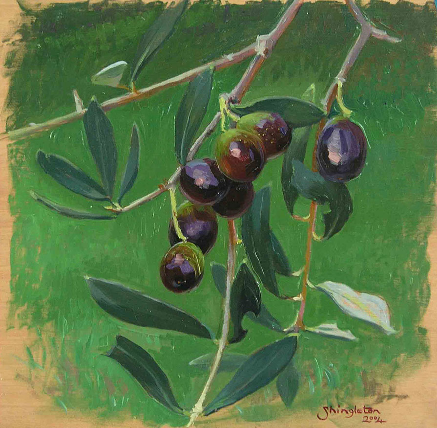 Ripening olives, black