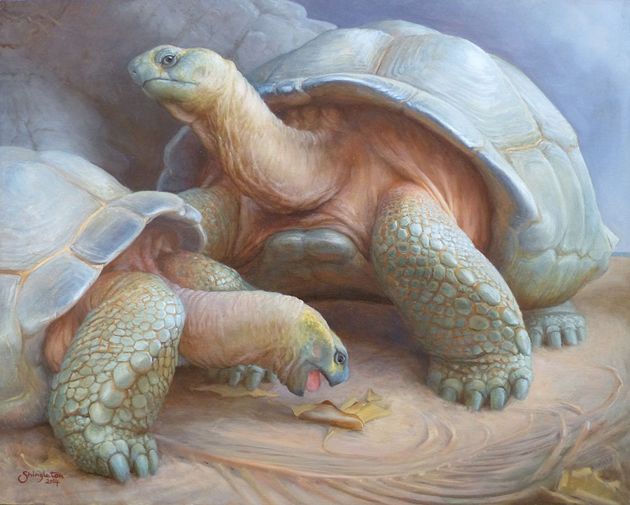 Living relics, Aldabra giant tortoises - oil painting
